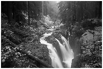 Sol Duc Falls in autumn. Olympic National Park ( black and white)
