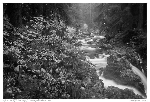 Sol Duc River in autumn. Olympic National Park (black and white)