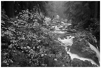 Sol Duc River in autumn. Olympic National Park ( black and white)