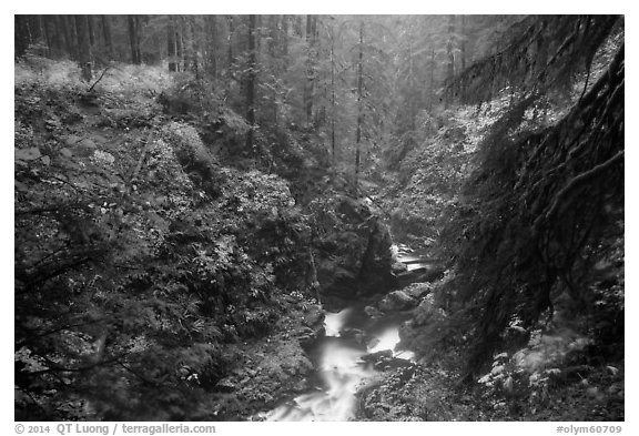 Gorge of Sol Duc River in autumn. Olympic National Park (black and white)
