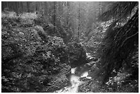 Gorge of Sol Duc River in autumn. Olympic National Park ( black and white)