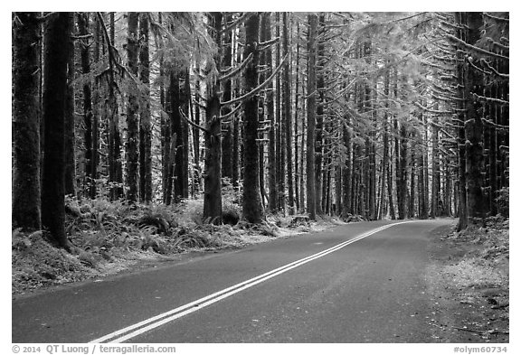 Road, Hoh Rain Forest. Olympic National Park (black and white)