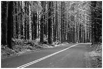 Road, Hoh Rain Forest. Olympic National Park ( black and white)