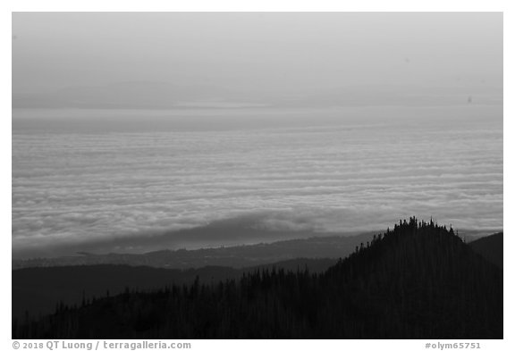 Sea of clouds above Strait of Juan de Fuca at sunrise. Olympic National Park (black and white)