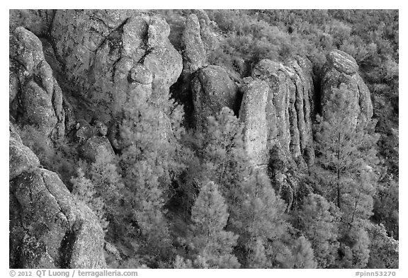 Rhyolitic rocks amongst pine trees. Pinnacles National Park (black and white)