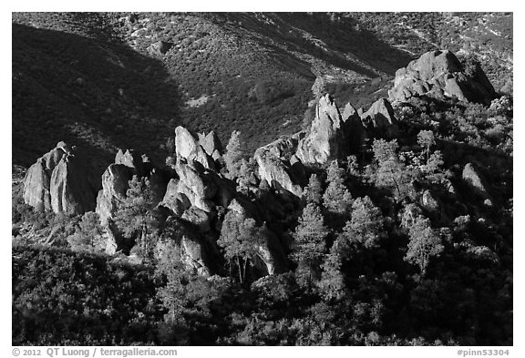 Pine trees and pinnacles. Pinnacles National Park (black and white)