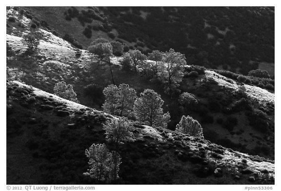 Trees on backlit ridges. Pinnacles National Park (black and white)