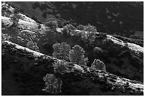 Trees on backlit ridges. Pinnacles National Park ( black and white)