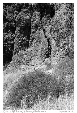 Dried wildflowers and colorful section of rock wall. Pinnacles National Park (black and white)