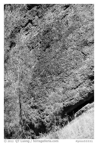 Colorful Breccia rock and summer grasses. Pinnacles National Park (black and white)