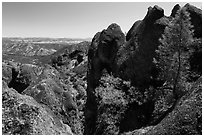 Pine trees growing amongst High Peaks rock faces. Pinnacles National Park, California, USA. (black and white)