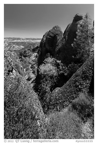 Dried wildflowers, trees, and pinnacles. Pinnacles National Park (black and white)