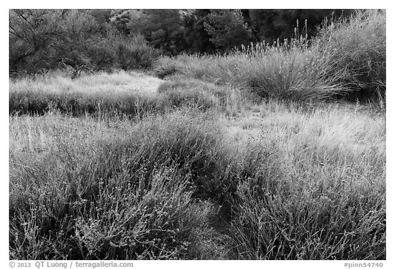 Winter frost on grasslands. Pinnacles National Park (black and white)