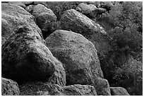 Boulders and trees in Bear Gulch. Pinnacles National Park ( black and white)