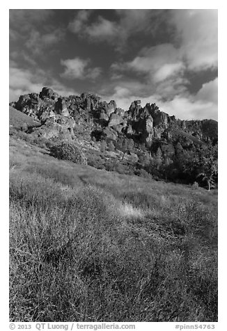 Shrubs in winter below pinnacles. Pinnacles National Park (black and white)