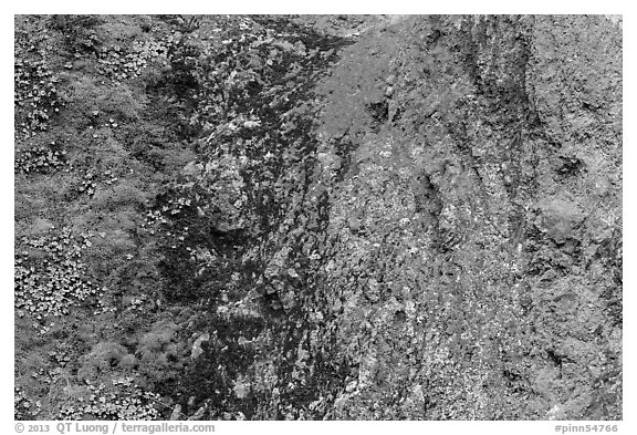 Green moss and orange lichen on rock wall. Pinnacles National Park (black and white)