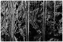 Icicles and moss, Balconies Cave. Pinnacles National Park ( black and white)