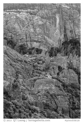 Cliffs and trees. Pinnacles National Park (black and white)