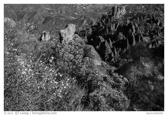 Blooms and pinnacles in spring. Pinnacles National Park (black and white)