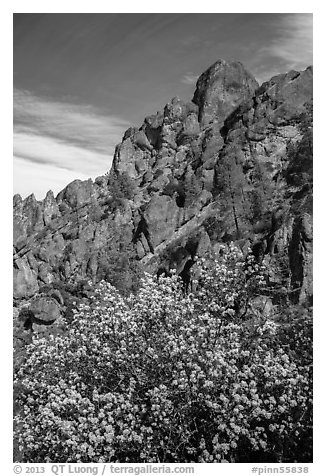 Spring blooms and high peaks from Juniper Canyon. Pinnacles National Park (black and white)