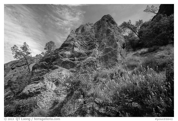 Lupine and rock towers in Juniper Canyon. Pinnacles National Park (black and white)