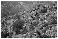 Carpets of spring wildflowers amongst rocks. Pinnacles National Park, California, USA. (black and white)