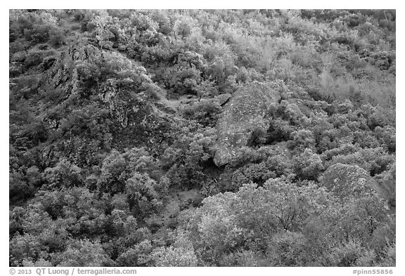 Hillside and rocks in spring. Pinnacles National Park (black and white)