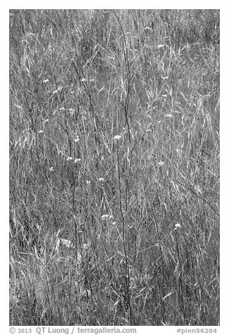 Flowers and grasses. Pinnacles National Park (black and white)
