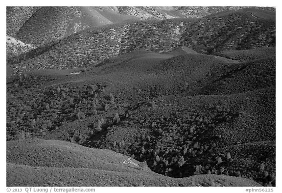 Forested hills seen from above. Pinnacles National Park (black and white)