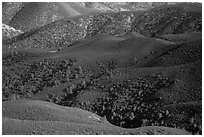 Forested hills seen from above. Pinnacles National Park ( black and white)