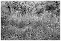 Shrubs and trees in autumn. Pinnacles National Park ( black and white)