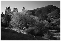 Trees and hill, early autumn morning. Pinnacles National Park ( black and white)
