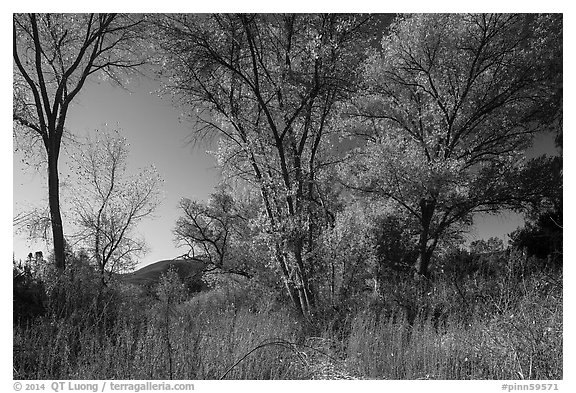 Autumn landscape with brighly colored trees. Pinnacles National Park (black and white)