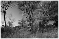 Autumn landscape with brighly colored trees. Pinnacles National Park ( black and white)