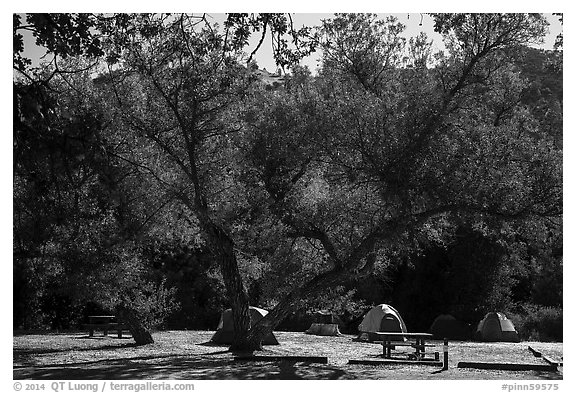 Campground. Pinnacles National Park (black and white)