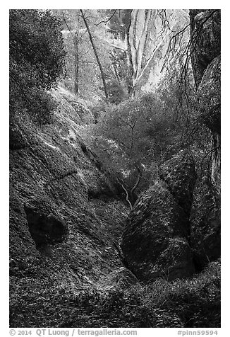 Creek and rocks near Balconies Cave. Pinnacles National Park (black and white)