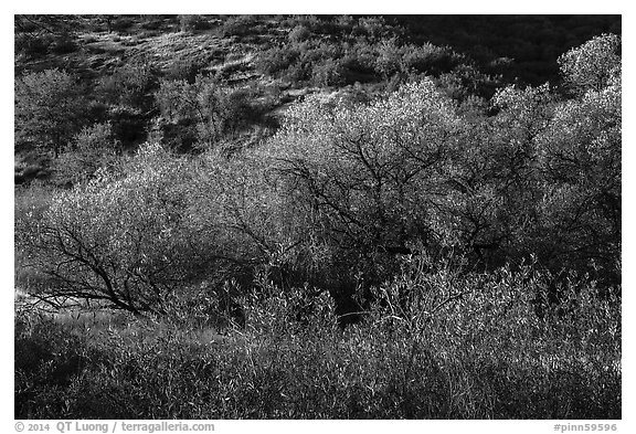 Fall foliage on creek and hill near Balconies. Pinnacles National Park (black and white)