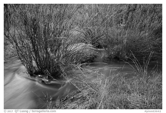 Chalone Creek flowing through reeds. Pinnacles National Park (black and white)