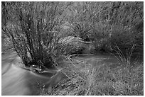 Chalone Creek flowing through reeds. Pinnacles National Park ( black and white)