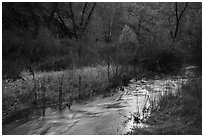 Chalone Creek flowing. Pinnacles National Park ( black and white)