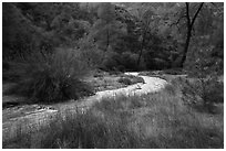 Chalone Creek in winter. Pinnacles National Park ( black and white)