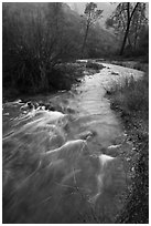 Chalone Creek flowing fast on rainy day. Pinnacles National Park ( black and white)