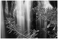 Leaves and Bear Gulch Reservoir waterfall. Pinnacles National Park ( black and white)