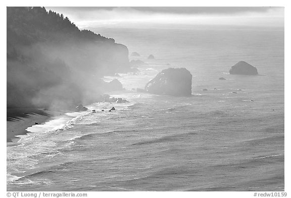 Morning mist on coast. Redwood National Park (black and white)