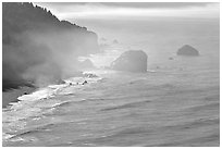 Morning mist on coast. Redwood National Park ( black and white)