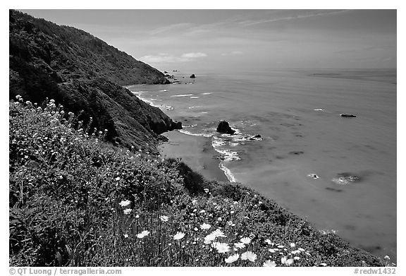 Wildflowers and Enderts Beach. Redwood National Park (black and white)