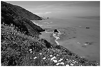 Wildflowers and Enderts Beach. Redwood National Park ( black and white)