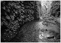 Fern-covered walls, Fern Canyon. Redwood National Park, California, USA. (black and white)