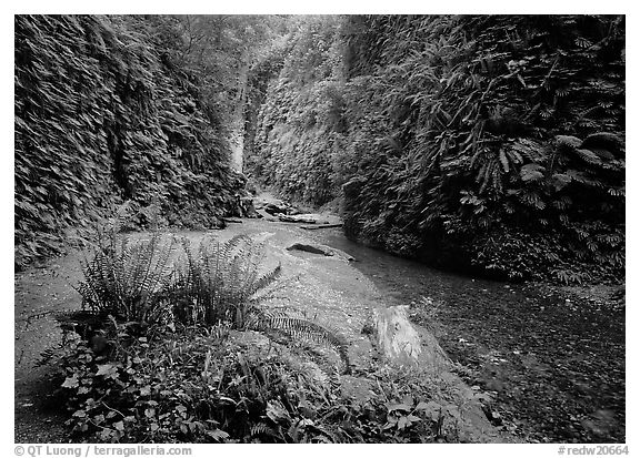 Fern Canyon, Prairie Creek Redwoods State Park. Redwood National Park (black and white)