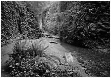 Fern Canyon, Prairie Creek Redwoods State Park. Redwood National Park ( black and white)